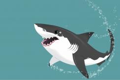 wild kratts shark